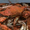 Sailing to Cantler's to enjoy a Maryland Crabfeast