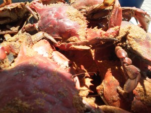 Yummy crabs from Cantler's