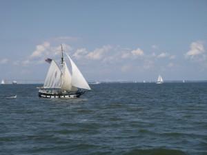Fun Boats on the Bay
