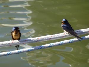 Friends join the Boat & Breakfast