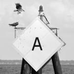 Osprey's landing on a channel marker in the bay
