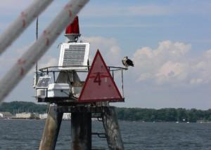 Osprey is keeping a watchful eye on us.