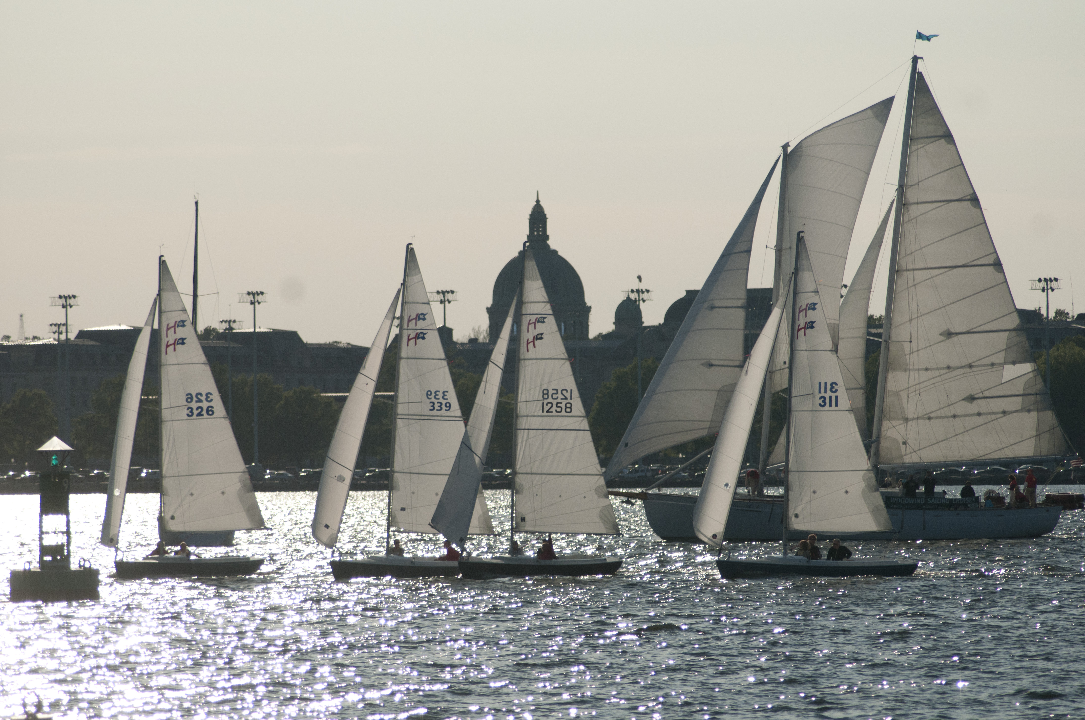 Black and white Schooner and Sailboats with Annapolis Skyline