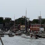 Annapolis Harbor full of boats