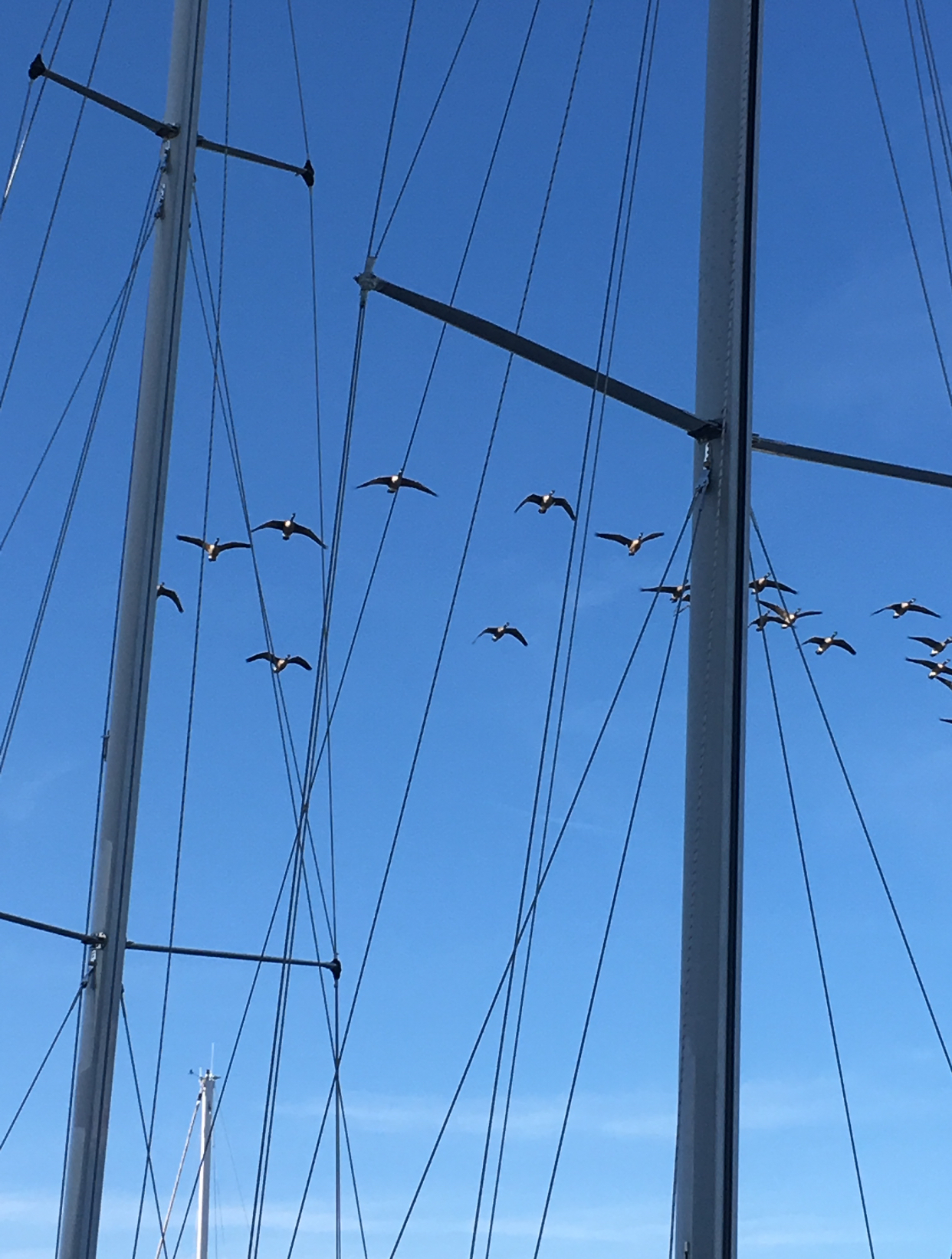 Blue sky with masts and rigging and a flock of birds